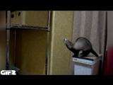 #72 Гифки со звуком  Прикольные видео подборки! vk.comgifswithsound
