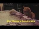 Кот Жулик и белый ёжик