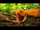 Мир приключений - Скорпионы,Тарантулы,змеиный остров,гремучник