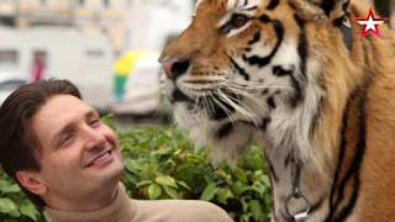 «Легенды Цирка с Эдгардом Запашным» - №20 - Тигр Мартин
