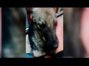 Собаку над которой всю жизнь издевались первый раз погладили
