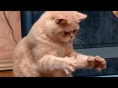 СМЕЯЛИСЬ ДО СЛЕЗ! Смешные видео приколы про животных. Лучшие приколы года. FANNY VIDEO