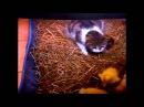 Самые заботливые кошки и коты.Приколы про животных!Улётное видео!