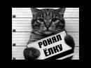 Приколы с котами смешные коты котики приколы про котов до слёз смешные кошки луч...