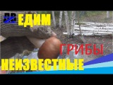 Дальневосточный гектар Едим неизвестные грибы бурим скважены