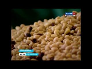 Репортаж телеканала «Россия 1» из Кедрового дома «Мегре»