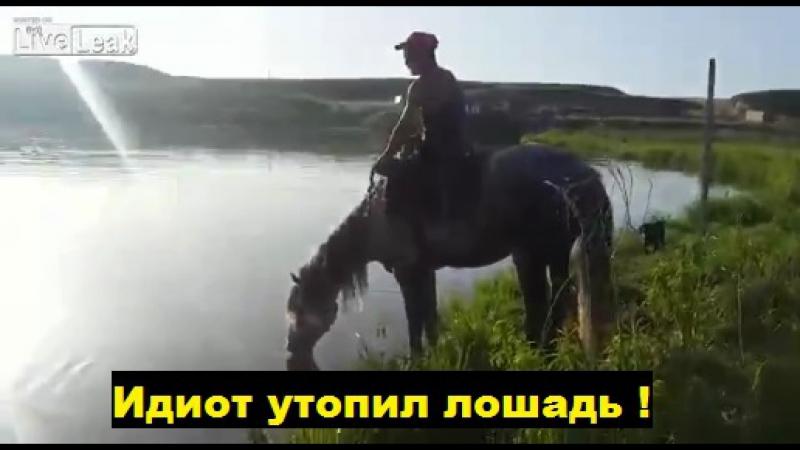 Идиот утопил лошадь!
