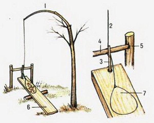 Как сделать ловушку на лесу