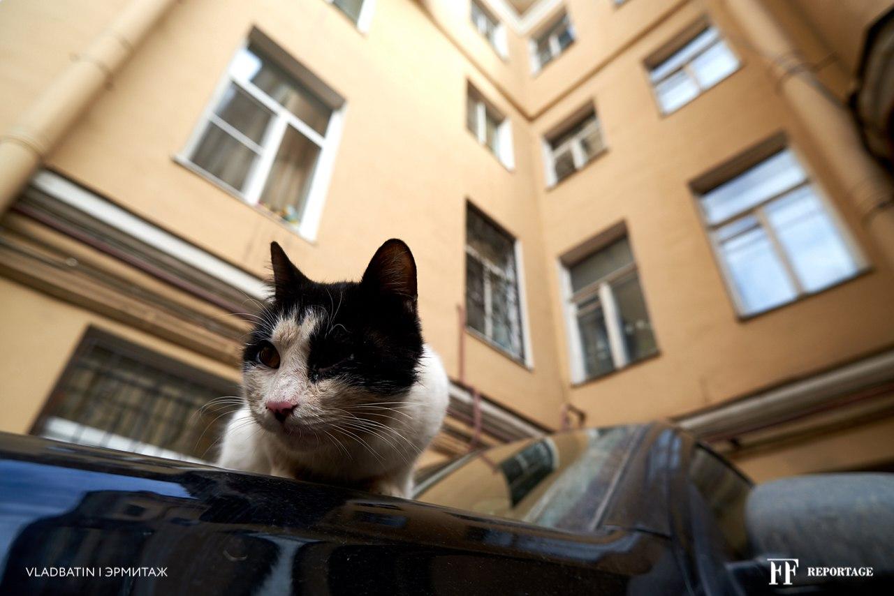 город и кошка, кошки в городе
