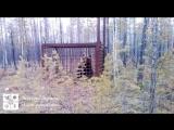 В Мирном поймали медведя и заперли в клетку