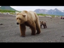 Туристы и медведица