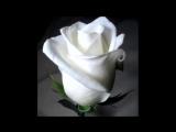 Цветы-4 под музыку Юрий Шатунов - Белые розы Picrolla