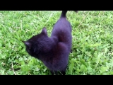 Кошки Аталанта и Афина-Геката