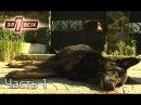 Зачем догхантеры убивают бродячих собак Один за всіх Часть 1 из 4 от 25 09 16