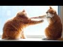Смешные Коты и Кошки 2017 Приколы с Котами и Кошками 2017 Funny Cats Compilation 59