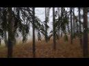 Лес Расслабляющий Шум Дождя