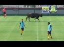 Животные на футбольном поле / Самые ржачные приколы в футболе