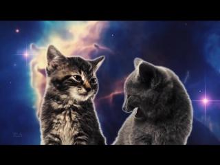 Котята мяукают ППК
