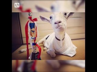 Жительница Японии 8 лет живёт со своим лучшим другом-козлом