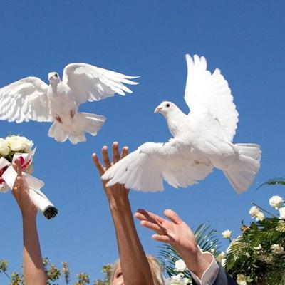Поздравления со словами о голубях