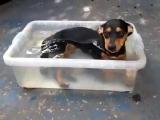 размер бассейн не имеет значения, главное-покинуть ваш щенок.