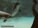 Devuwka ustroila predstavlenie dlja delfina