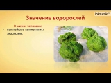 Многообразие водорослей.Значение водорослей