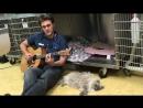 Ветеринар играет на гитаре для пациентов после операций