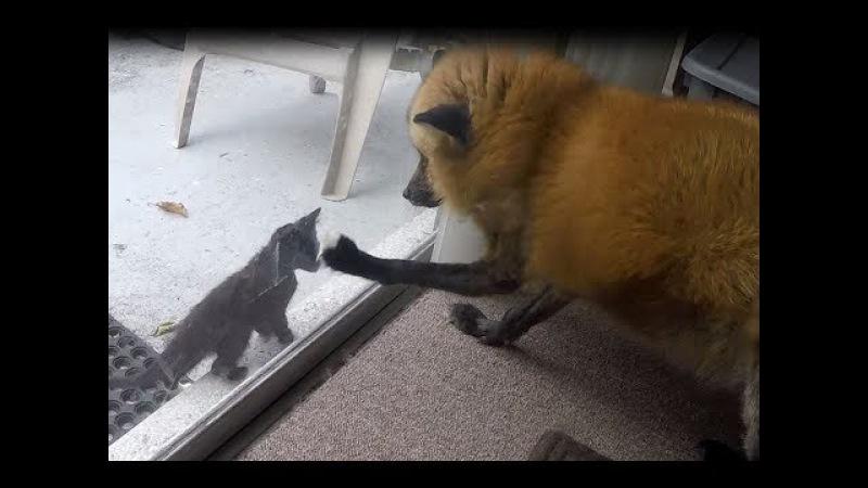 Part 1: Loki met some kittens