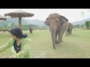 Elephants follow a woman riding a bicycle