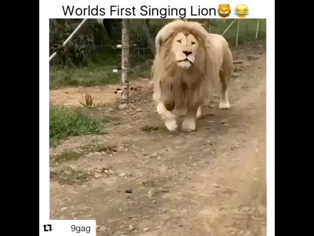 _.naga video