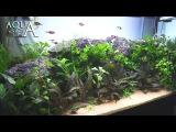 Aquascaping Lab - Tutorial Natural planted Aquarium