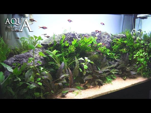 Aquascaping Lab - Tutorial Natural planted Aquarium African Wall (size 80x 35x45h 120L)