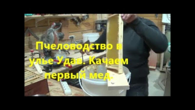 Пчеловодство в улье Удав. Качаем первый мед. Beekeeping. Download first honey