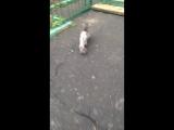 Кошака бездомного обрили :))