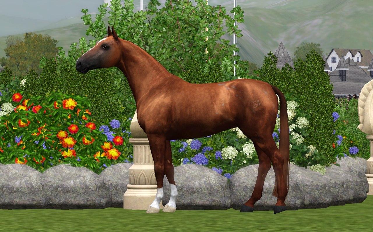 Регистрация лошадей в RHF 2 - Страница 4 QiWx92WiEnI