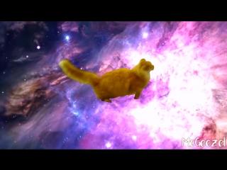 Cat Jumping Off Snowy Car Roof - Shooting Stars Meme