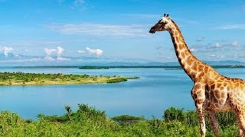 Дикая Африка. Река Нил. Документальный фильм National Geographic.