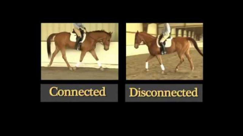Как заставить работать спину Вашей лошади
