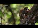 Скрытый мир Амазонки Nat Geo Wild Amazon Underworld 2016