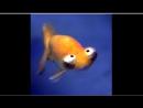 омега и альфа странные рыбы