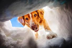 В Твери бездомные собаки помогли спасти, провалившегося под лёд челове