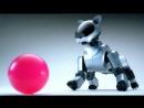ROBO TOYS - SONY AIBO ROBOT DOG - MUSIC VIDEO
