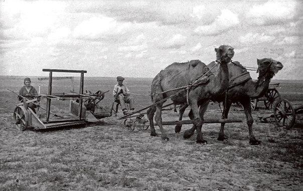 Колхозники сельхозартели им. Осоавиахима выезжают на сенокос.