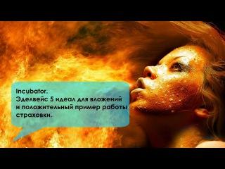 Incubator. Эдельвейс 5 идеал для вложений и положительный пример работы страховки