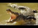 Документальный фильм. Дикий мир животных. Африка. Крокодилы.