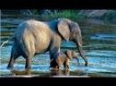 Мир животных. Дикая Африка. В объективе. Документальный фильм.