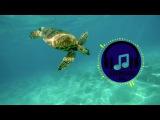 Anozira ft. Luna Blake - Got to Give Electronic