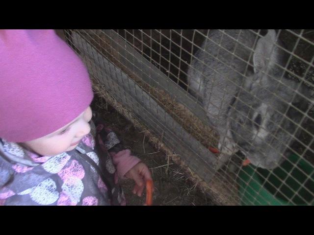 Стаусиная ферма Вичка кормит кроликов Strausinaya ferma Vlog