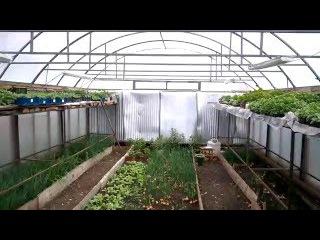 бизнес идея в кризис теплица business idea in a crisis, greenhouse